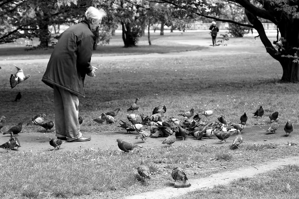 Ainda trêmulo e titubeante, passava horas dando de comer aos pombos.