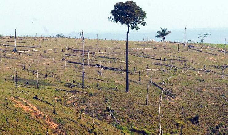 Por conta de técnicas diversas de recuperação de plantas e do monitoramento, quase um milhão de hectares da Mata Atlântica foram regenerados.