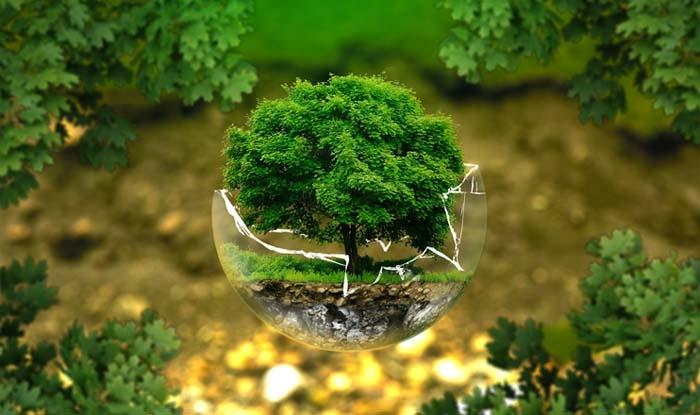 Florestas e árvores devem receber reconhecimento.