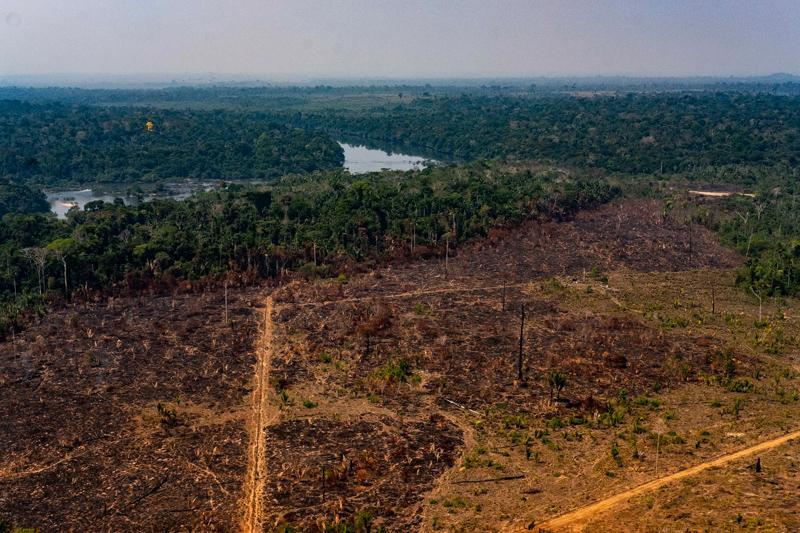 'O governo do Brasil, liderado por Jair Bolsonaro, favorece o desenvolvimento da floresta amazônica em detrimento de sua conservação'