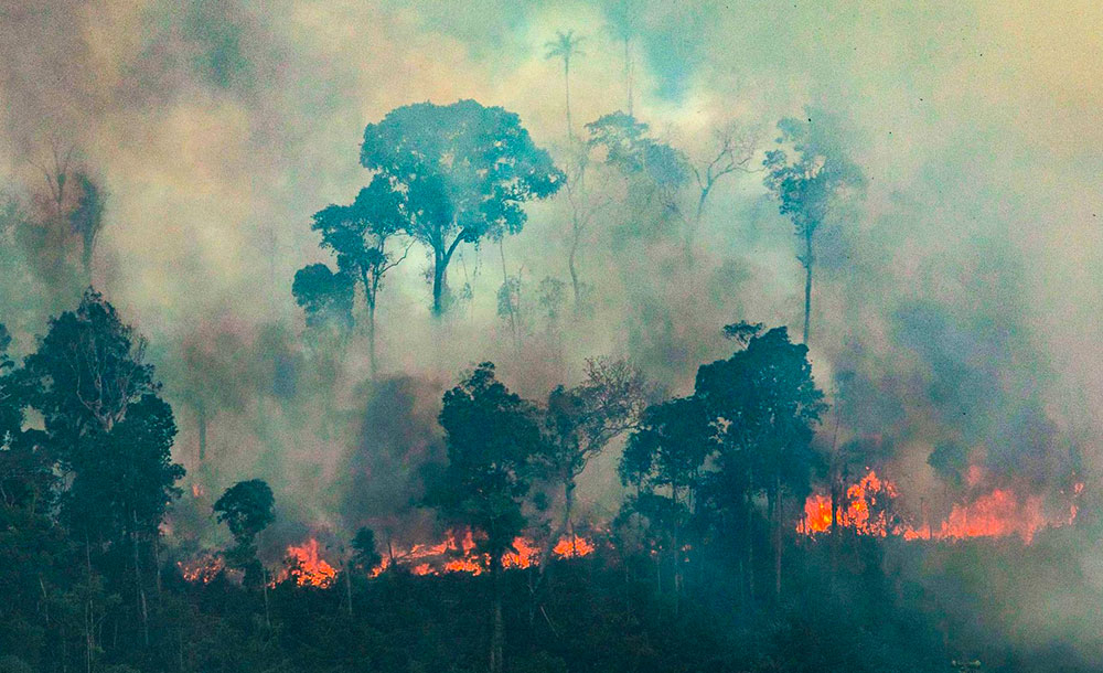 'Estamos vendo o aumento do desmatamento e das queimadas em 2019. Um aumento muito significativo', alerta cientista.