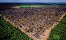 Área desmatada no Pará, onde Ibama não tem apoio da PM (Mayke Toscano/Gcom)