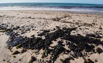 As manchas de óleo que atingem o litoral da região Nordeste chegaram com força à Praia da Pituba em Salvador nas manhãs dos últimos dois dias (Luca Castro/Fotoarena/Estadão Conteúdo)