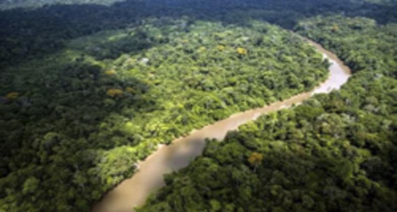 Os leitores encontrarão informações importantes sobre o território amazônico de todos os países que o constituem. (AFP PHOTO / JODY AMIET)