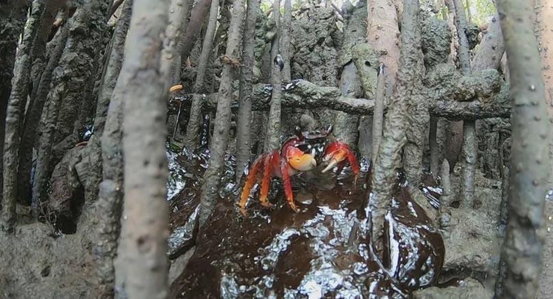 Óleo já atinge manguezais no nordeste