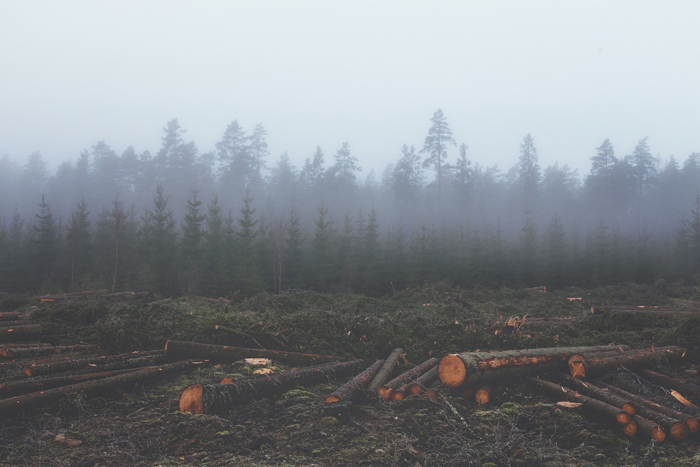 Os efeitos do desflorestamento continuam sendo um desafio para o país