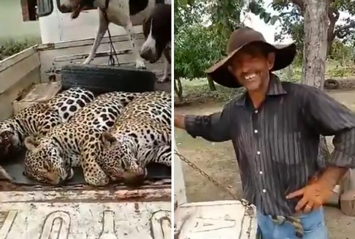 No vídeo, ele conta que os três animais estavam em uma árvore e que chegou a sentir