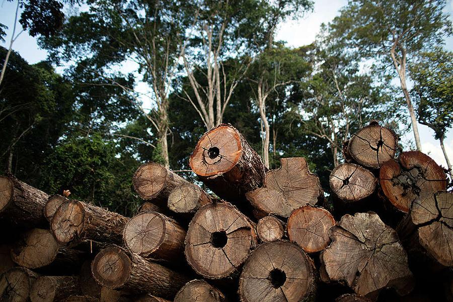 Extração ilegal de madeira no Pará