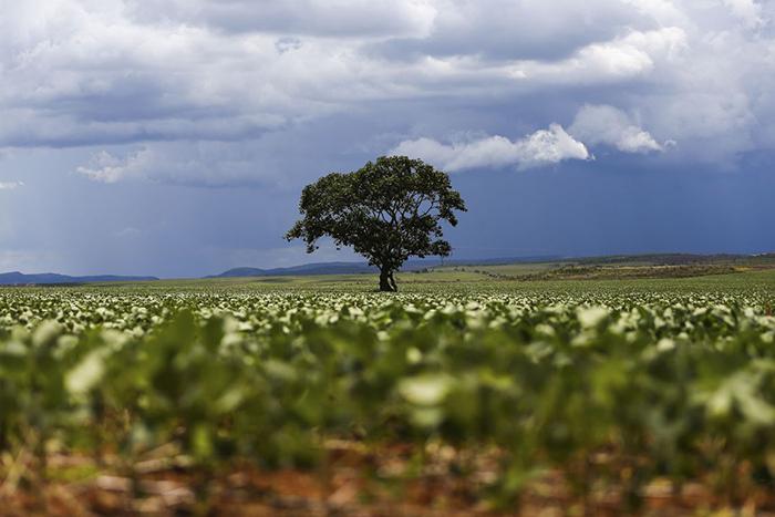 Em entrevista, Paulinelli defendeu amplo estudo dos biomas brasileiros para nortear limites de uso no presente e no futuro