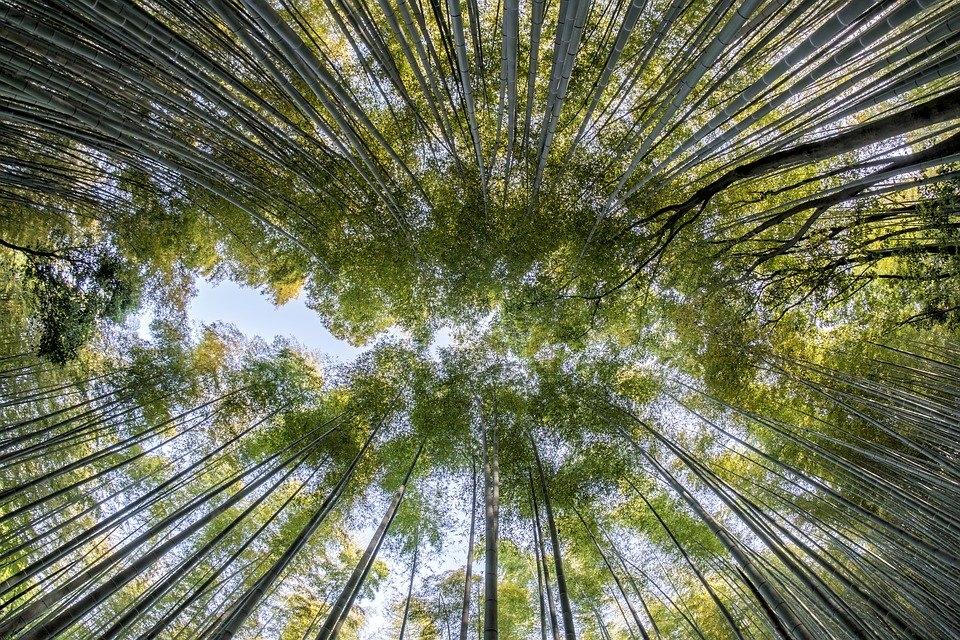 Em todo o mundo o bambu contém aproximadamente 1641 espécies e 120 gêneros descritos