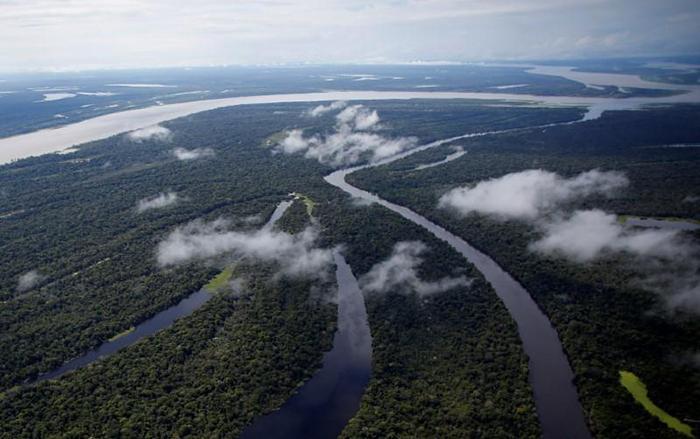 Antes repleta de ativistas, a delegação do Brasil, lar da maior parte da vasta floresta amazônica, agora só tem autoridades do governo