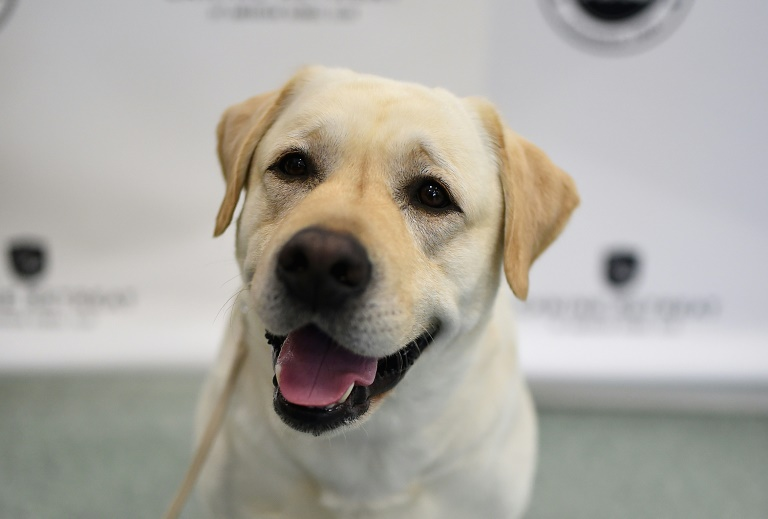 Cães sabem categorizar palavras, mesmo pronunciadas por desconhecidos