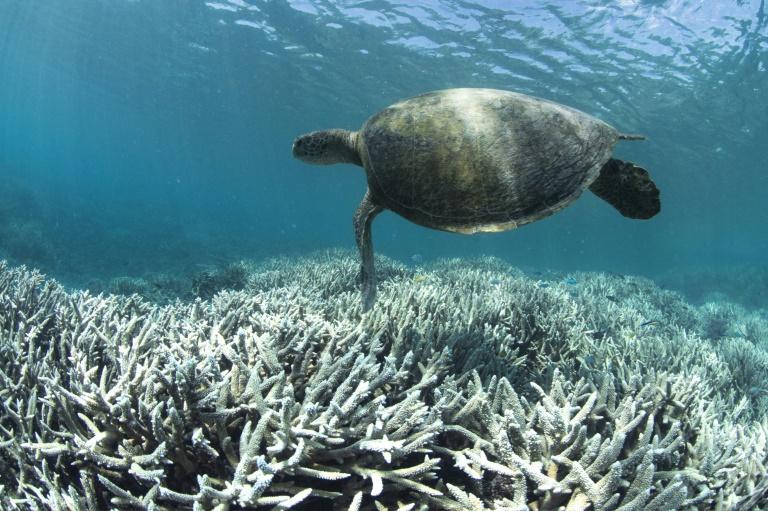 Atualmente, existem mais de 30.000 espécies em risco de extinção devido à atividade humana e às mudanças climáticas