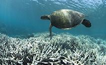 Atualmente, existem mais de 30.000 espécies em risco de extinção devido à atividade humana e às mudanças climáticas (XL CATLIN SEAVIEW SURVEY/AFP)