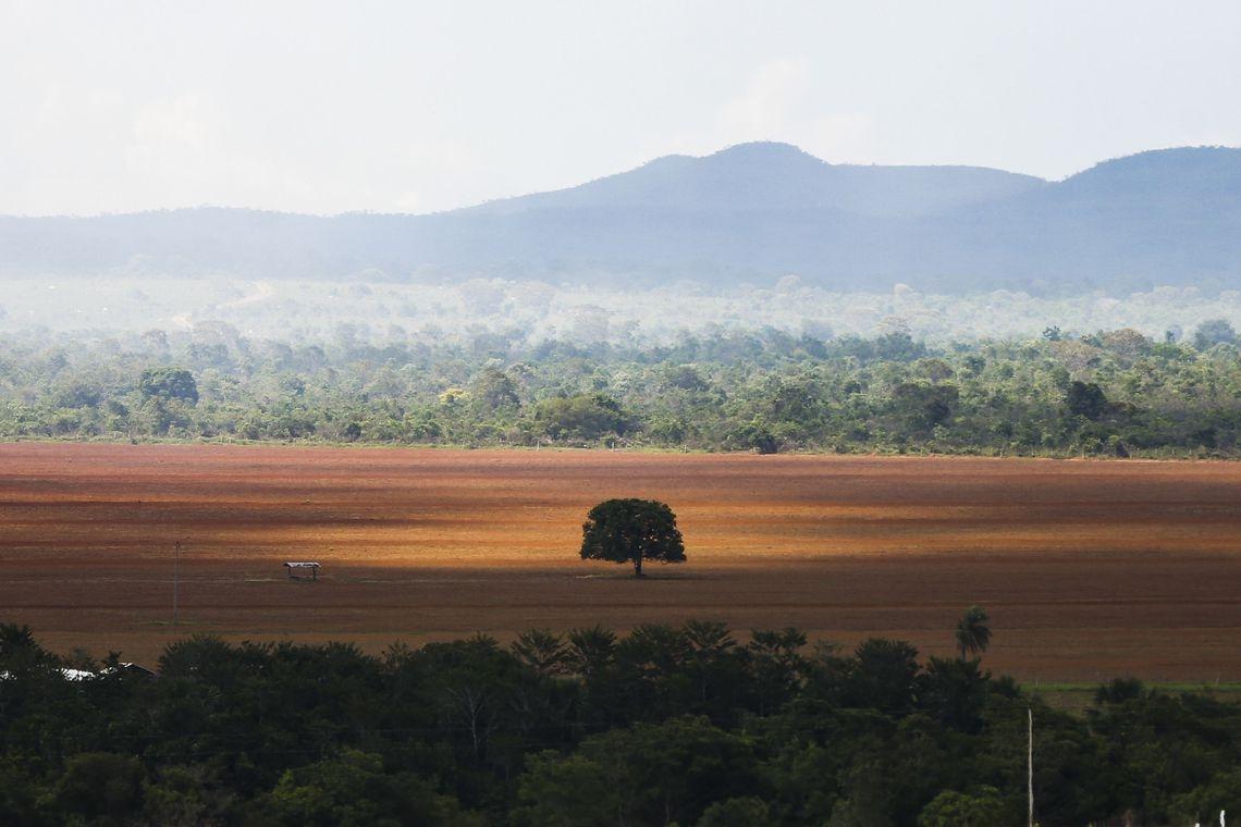 Segundo os procuradores, a restrição do plantio, em tese, em áreas já  degradadas não vai impedir o aumento do desmatamento