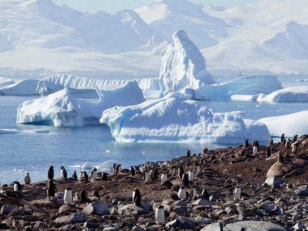 No dia 9 de fevereiro, cientistas brasileiros registraram a temperatura de 20,75°C na Antártida
