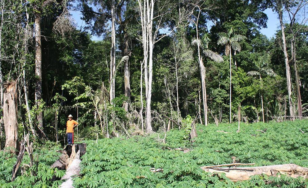 Para a realização do inventário, pesquisador fez quatro viagens e 35 entrevistas com famílias que trabalhavam com agricultura nas cinco aldeias que compõem a TI Kaxinawá de Nova Olind
