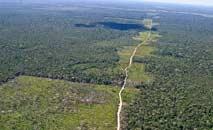 mapeamento conclui que florestas regeneradas desempenham importante papel sobre emissões de Co2 (Elza Fiuza/ABr)