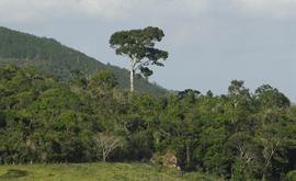 Mata de Murici, em Alagoas (Arquivo Pessoal)