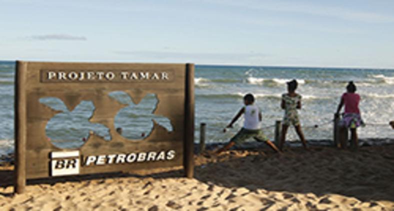 Em 40 anos, Projeto Tamar comemora soltura de 40 milhões de tartarugas (Fernando Frazão/ Agência Brasil)