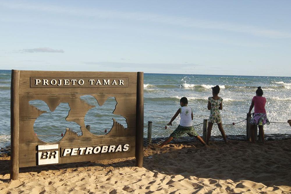 Em 40 anos, Projeto Tamar comemora soltura de 40 milhões de tartarugas