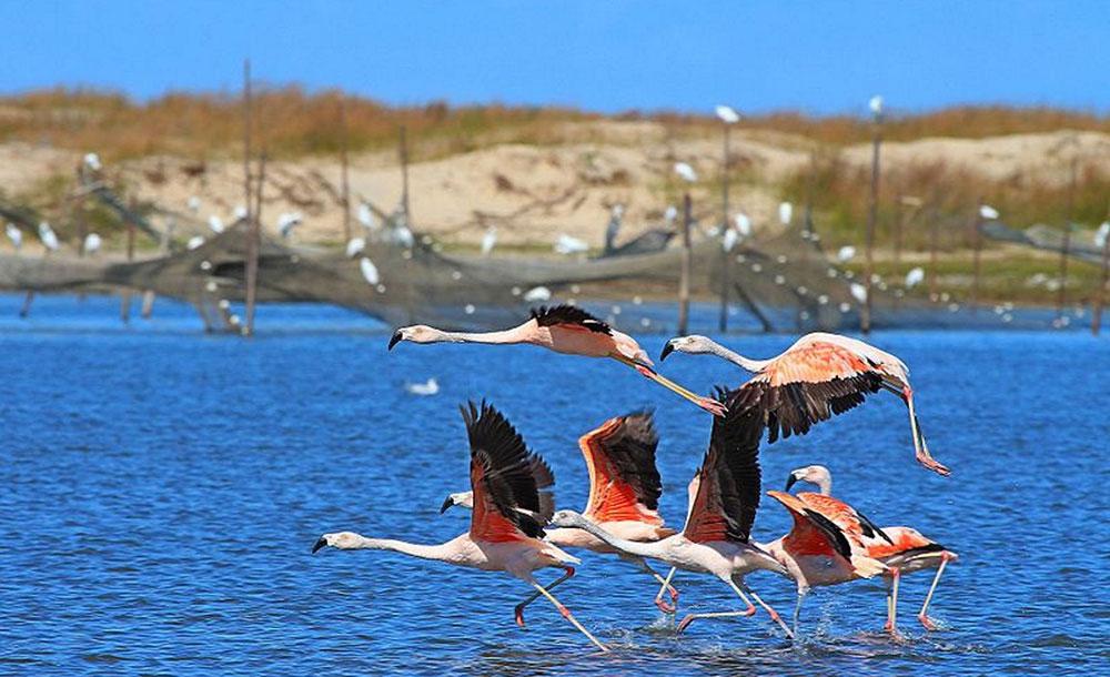 O Parque Nacional da Lagoa do Peixe foi criado em 1986, com o objetivo principal de proteger as aves migratórias.
