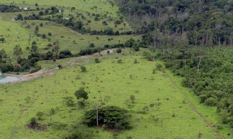 A proteção do meio ambiente é um direito coletivo garantido na Constituição