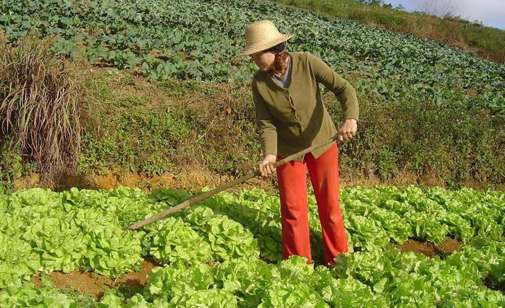 Agricultora trabalha em horta: recursos naturais devem ser usados de forma sustentável