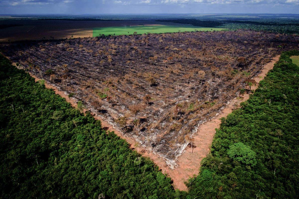 Desmatamento da Amazônia aumentou de 85% em 2019 com relação a 2018