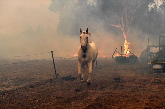 Cavalo tenta fugir das chamas próximas a cidade de Nowra, no Estado de Nova Gales do Sul - 31/12/2019