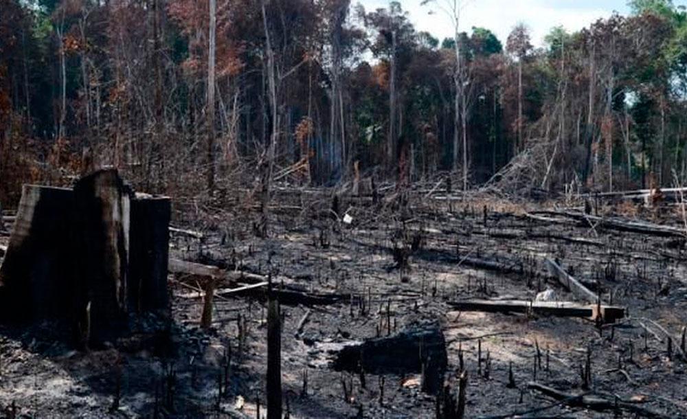 Em 2019, desmatamento da Amazônia foi o maior em 11 anos