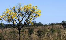 A área, que era de 4,02 milhões km² em 2000, passou a ser de 3,71 milhões de km², o que equivale a 42,4% do território (Toninho Tavares/Agência Brasília)