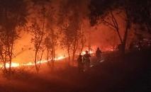 Quase 900 bombeiros participam no combate às chamas (AFP)