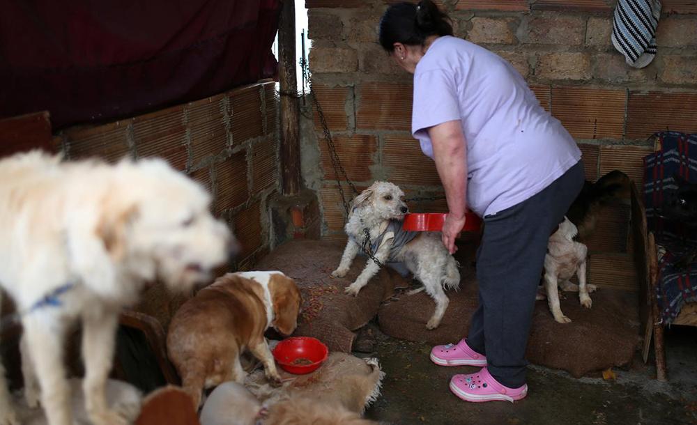 A administradora Blanca Rodríguez cuida de animais em abrigo de Bogotá