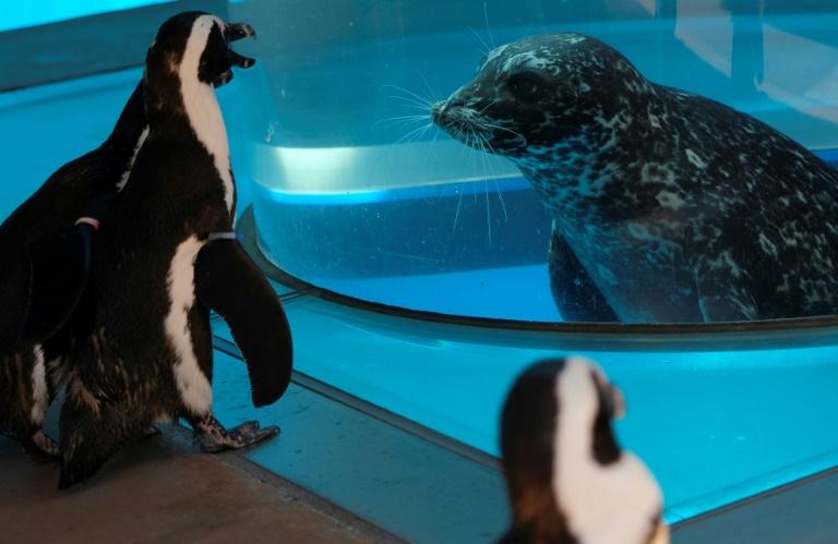 Focas e pinguins se encontram em aquário no Japão