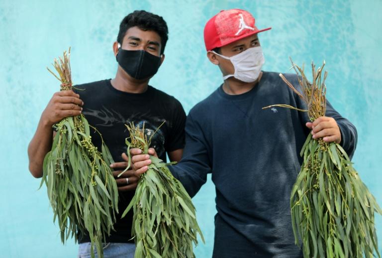 A polícia da Nicarágua prendeu vendedores de eucalipto nas ruas de Manágua. Vítimas relataram que o uso das folhas era sugerido como remédio para combater os sintomas do novo coronavírus.