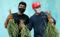 A polícia da Nicarágua prendeu vendedores de eucalipto nas ruas de Manágua. Vítimas relataram que o uso das folhas era sugerido como remédio para combater os sintomas do novo coronavírus. (AFP)