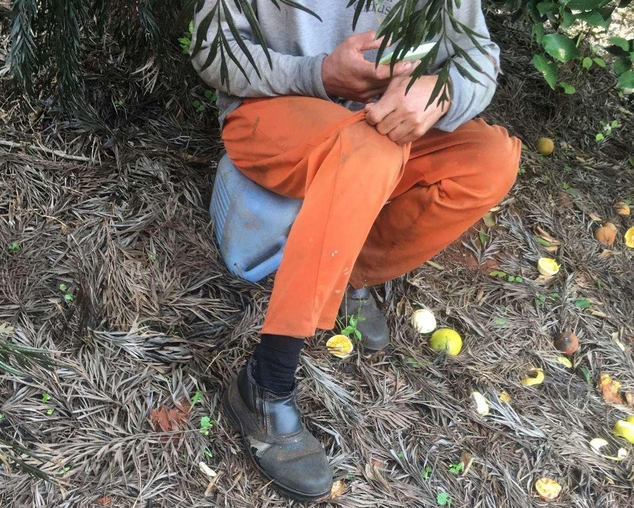 Fazenda autuada vende laranjas para a Citrosuco, gigante do setor que já integrou a 'lista suja' do trabalho escravo
