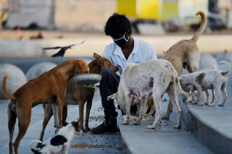 Um exército de amantes de animais indianos surgiu para alimentar milhões de animais abandonados e com fome pelo isolamento do coronavírus no segundo país mais populoso do mundo