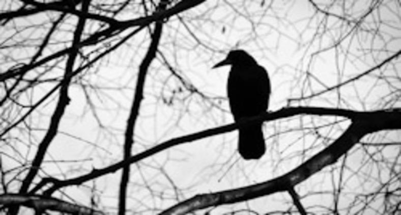 Morro de medo de ouvir de novo o canto daquele passarinho (Pixabay)