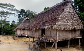 A imagem acima mostra a aldeia Lobo, do povo Matsés (Elaíze Farias/Amazônia Real)