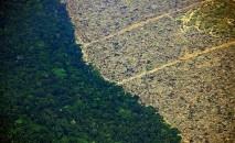 Florestas tropicais, os maiores santuários de biodiversidade do mundo, destruídos por incêndios e escavadeiras (AFP)
