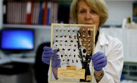 Tatyana Bitler, curadora da Autoridade de Antiguidades de Israel, mostra fragmentos de pergaminhos do Mar Morto em um laboratório em Jerusalém (AFP)