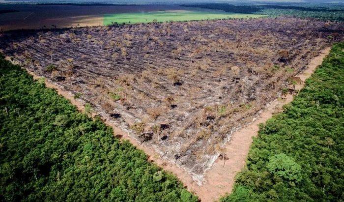 O percentual representa cerca de 11,6 milhões de hectares de florestas públicas empossadas no período de 1997 a 2018