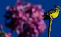 A observação de aves também tem ganhado reforço de adeptos informais, que passaram a perceber a fauna local com o distanciamento social (Marcello Casal Jr./ABr)