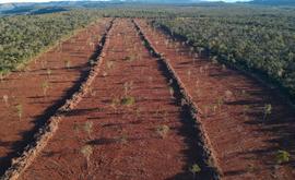 Área desmatada dentro do Território Kalunga (Semad/Divulgação)