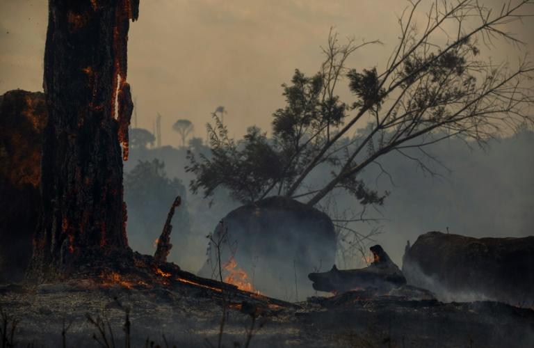 Zona de floresta queimada em Altamira, Pará, em 27 de agosto de 2019