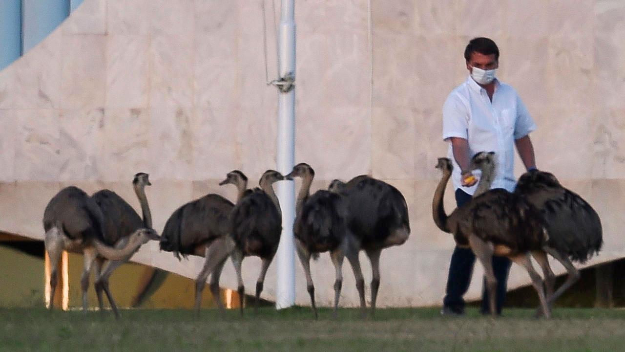 O presidente Jair Bolsonaro alimentando emas fora do Palácio
