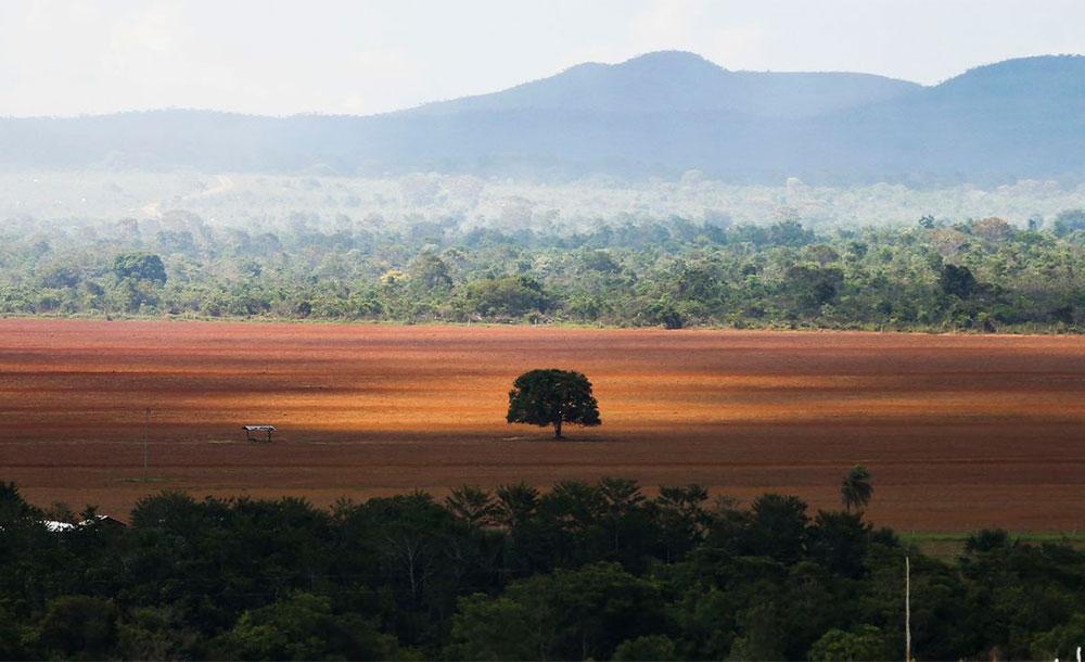 Eestudo avalia que em Mato Grosso, somente 3% dos imóveis possuíam de fato uma autorização para desmatar
