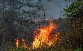 Entre agosto de 2018 e julho de 2019, a área destruída na Amazônia foi de 10 mil quilômetros quadrados, rompendo a tendência das últimas décadas de queda no desmatamento durante o período seco (João Laet/The Guardian/Repórter Brasil)